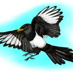 """Yellow-Billed Magpie"" by inkart"