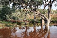 Reflections in an Outback creek, Flinders Ranges