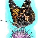 """American Painted Lady Butterfly"" by inkart"