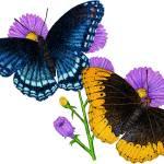"""""""Diana Fritillary Butterflies"""" by inkart"""