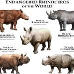 """""""Endangered Rhinoceros of the World"""" by inkart"""