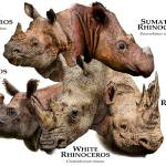 """Rhinos of the World"" by inkart"