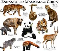 Endangered Mammals of China