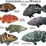 """groupers"" by inkart"