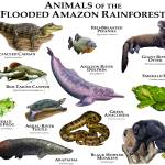 """Animals of the Flooded Amazon Rainforest"" by inkart"