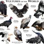 """Vultures of the World"" by inkart"