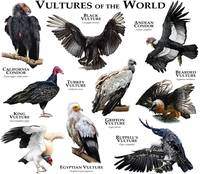 Vultures of the World