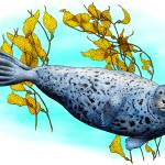 """Common Harbor Seal"" by inkart"