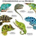 """""""Chameleons"""" by inkart"""
