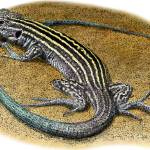 """""""New Mexico Whiptail"""" by inkart"""