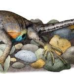 """Texas Earless Lizard"" by inkart"