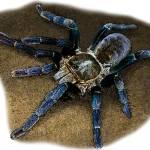 """Cobalt Blue Tarantula"" by inkart"