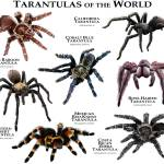 """Tarantulas of the World"" by inkart"