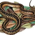 """""""Eastern Garter Snake"""" by inkart"""