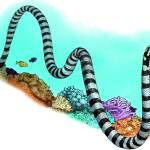 """Black-Banded Sea Krait"" by inkart"