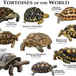"""Tortoises of the World"" by inkart"