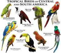 Tropical Birds of Central and South America