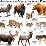 """yellowstone"" by inkart"