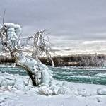 """Ice Tree"" by PeterEbyPhotography"