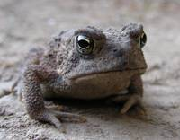 WeeToad