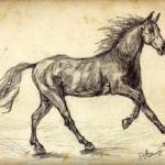 """Horse Freehand Graphite Study"" by GinetteCallaway"