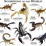 """Scorpions of the World"" by inkart"
