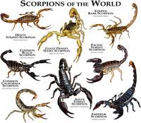 Scorpions of the World