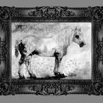 """Percheron Modern Horse Art by Ginette"" by GinetteCallaway"