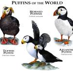 """Puffins of the World"" by inkart"