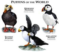 Puffins of the World