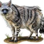 """Southern Aardwolf"" by inkart"