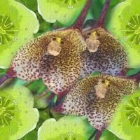Orchid Monkeys Art Prints & Posters by Diane Lynn Hix