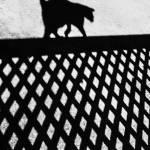 """Cat shadow"" by SheilaSmart"