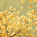 """""""vintage spring"""" by IrisLehnhardt"""