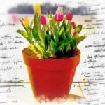 """Watercolor pot of tulips"" by lizmix"