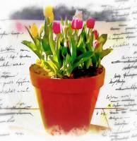 Watercolor pot of tulips