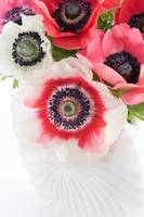 Anemones in a White Shell Vase
