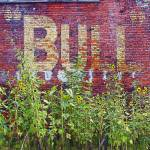 """Bull Durham and Daisies"" by RebeccaKorpita"