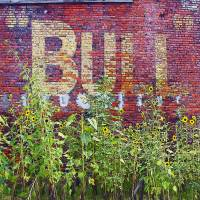 Bull Durham and Daisies Art Prints & Posters by Rebecca Korpita