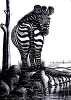 african-zebra-at-river-bunks.gif