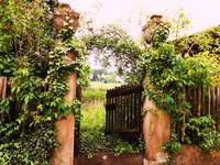 IVY COVERED ENTRANCE