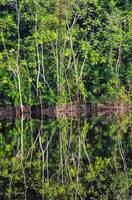 Amazon Reflections 4