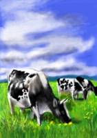 Cows in the Wind