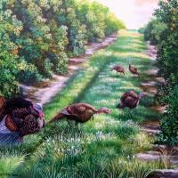 Florida Orange Groves and Osceola Turkeys Art Prints & Posters by Daniel Butler