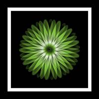 Abstract Green Flower on Black Background