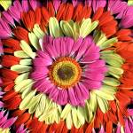 """Daisy Tie-Dye"" by LindaCavaney"