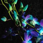 """Purple Orchid Buds"" by bloomingvinedesign"