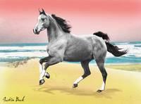 Beach Horse Justin Beck Picture 2015081