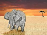 Savana Elephant Justin Beck Picture 2015085