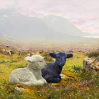 Lambs on a Hillside by I.M. Spadecaller